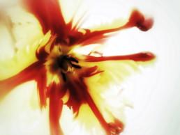 artnorama - Blossom Blast