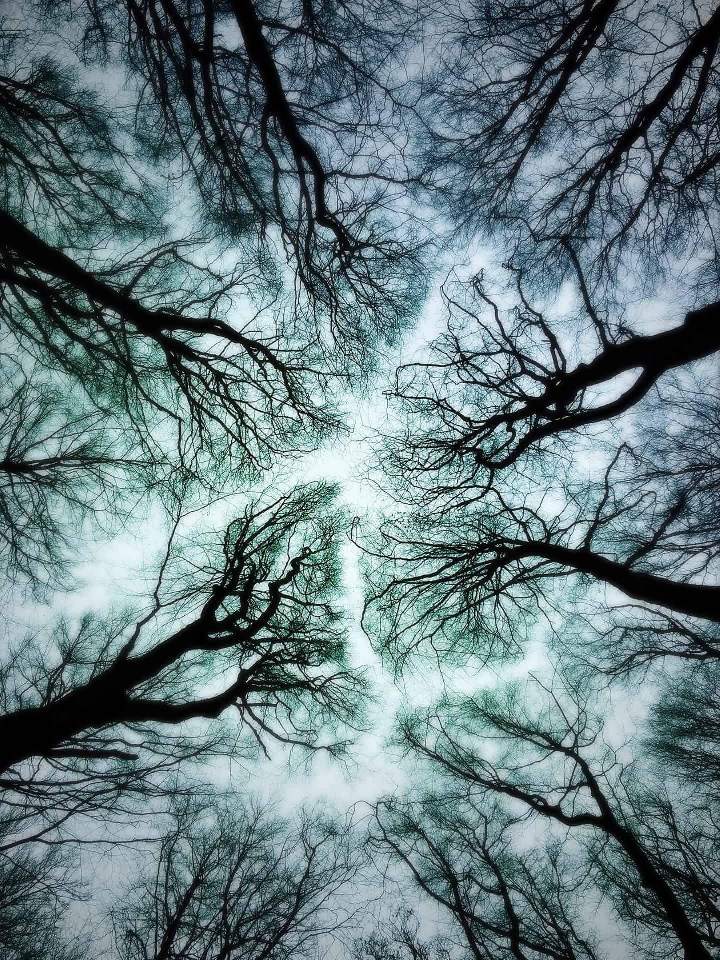 artnorama - Dream Trees