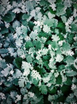 artnorama - Silky Leaf