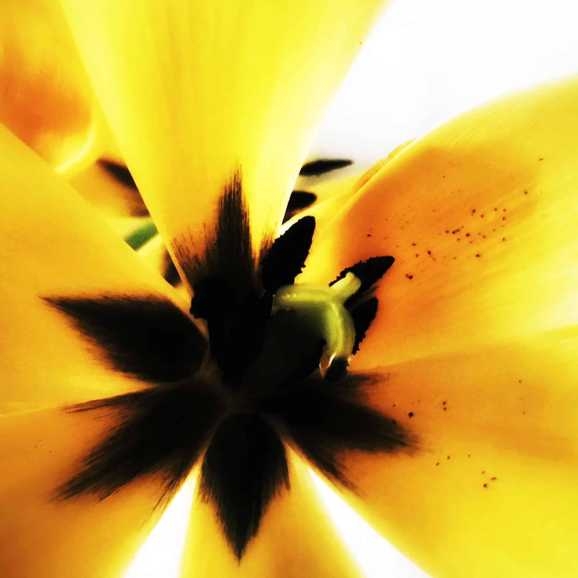 artnorama - Yellow Blossom