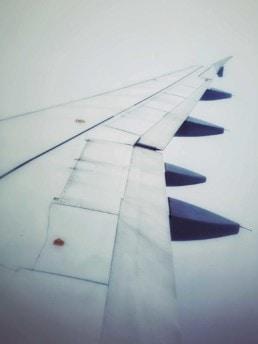 artnorama - Wing