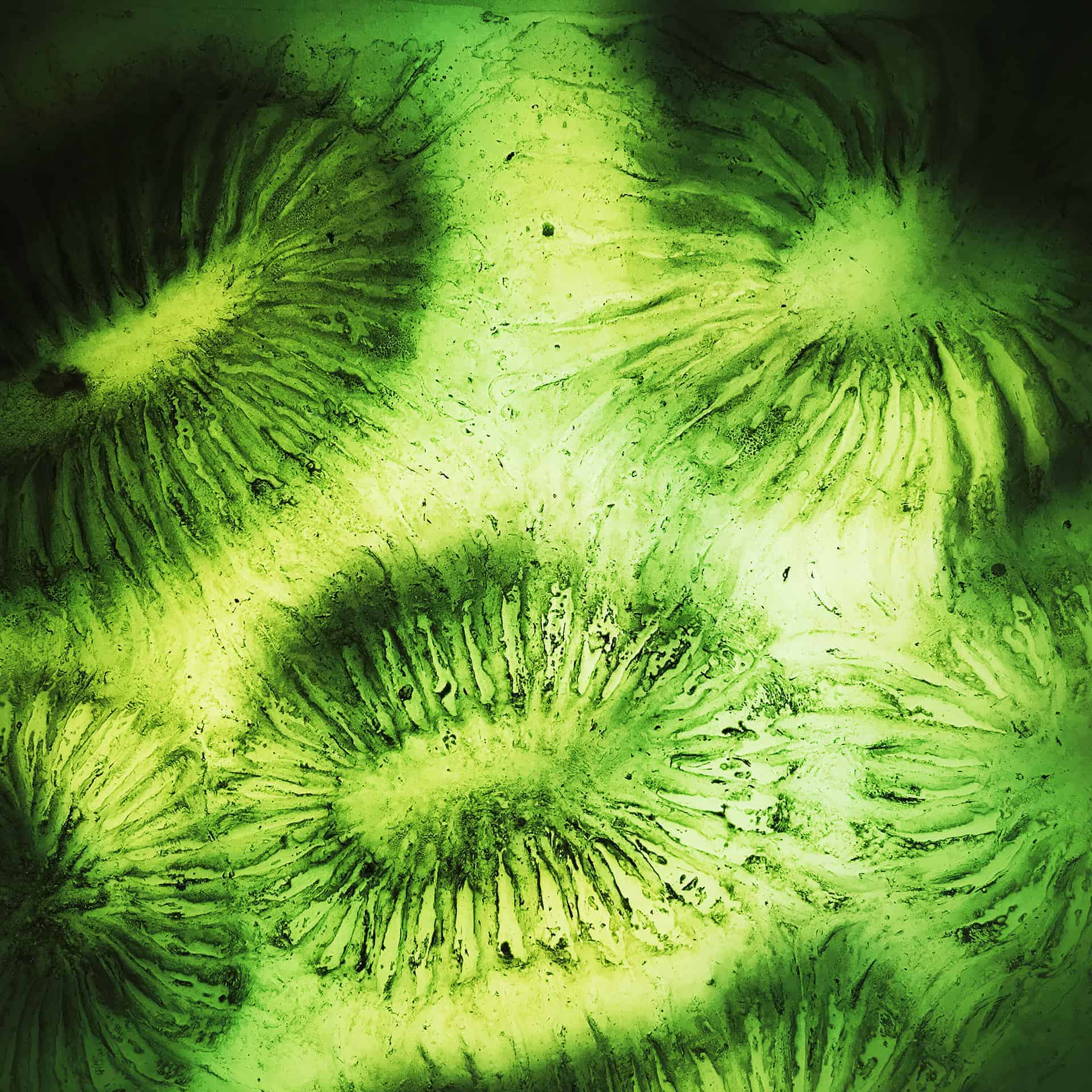 artnorama - Plankton