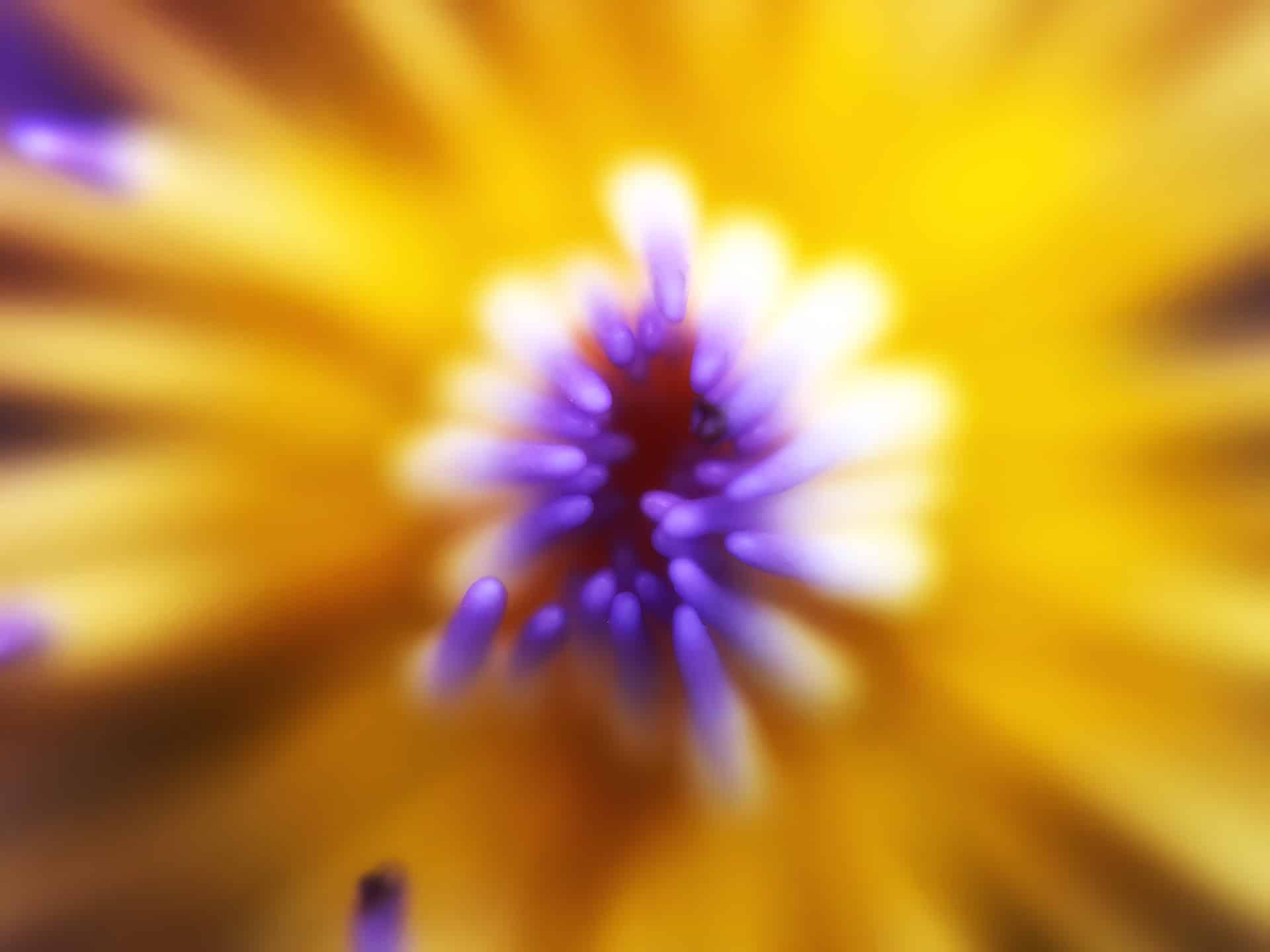 artnorama - Blossom Nucleus