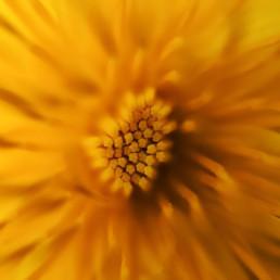 artnorama - Flower Sun