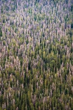 artnorama - Woods Climb