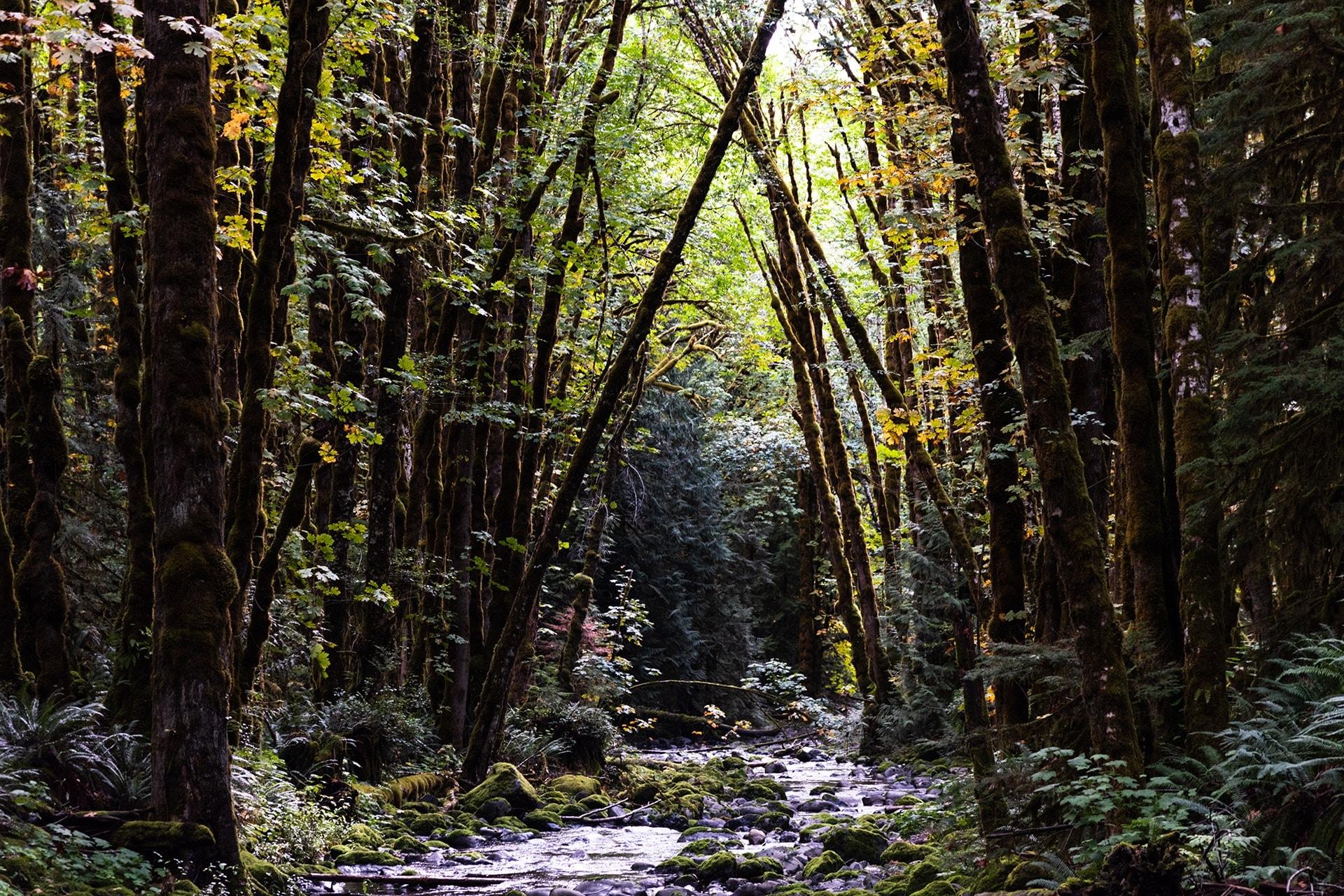 artnorama - Green Grove