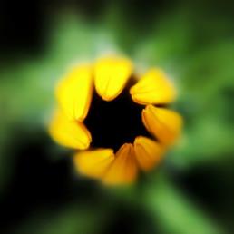 artnorama - Round FloweringBluete_Natur_Pflanze_Blossom_Detail_Macro_Plant_Hole_Finger_Torsion_Leaf_Blaetter