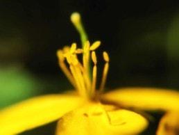 artnorama - Open Blossom