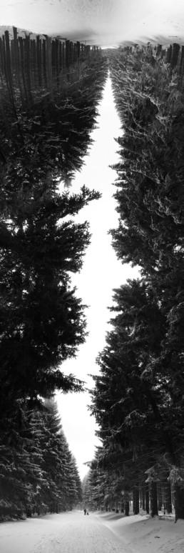 artnorama - Forrest Rupture