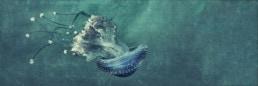 artnorama - Tumbling JellyfishMeduse_Qualle_Fisch_Meeresbewohner_Tier_Natur_Tiefsee_Rauschen_Noise