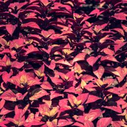 artnorama - Leaves Carpet