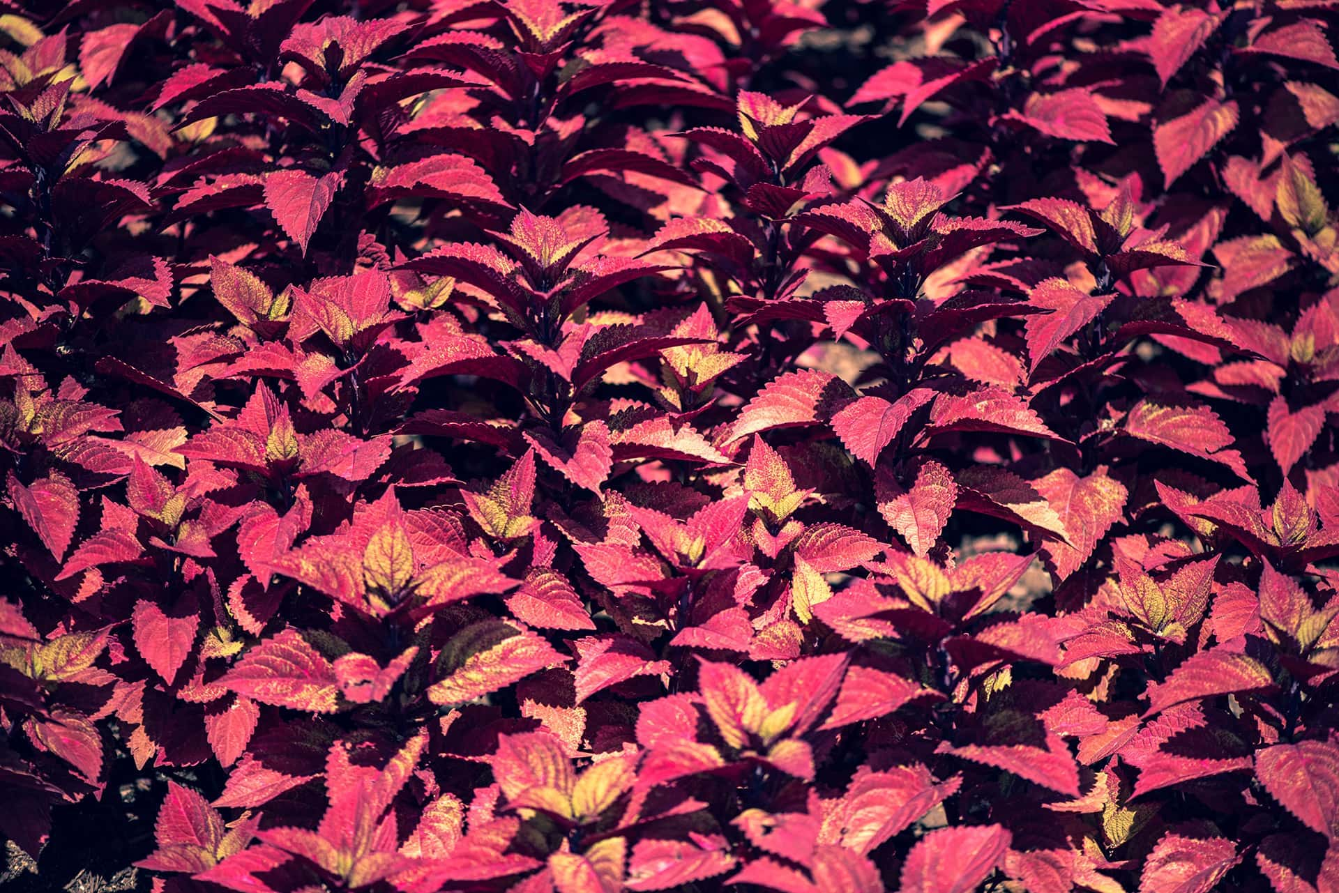 artnorama - Leaves Carpet