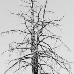 artnorama - Dead Tree
