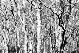 artnorama - Veins of Forest